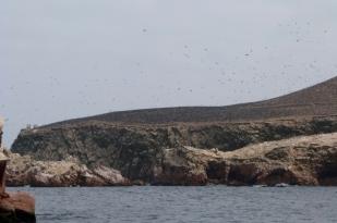 Ptaki z Islas Ballestas
