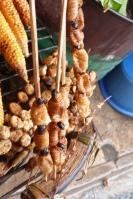 Iquitos, suri (larwy) (2)