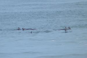 A w oceanie... delfiny!