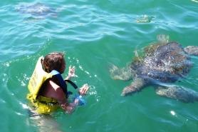 Pływanie z zolwiami