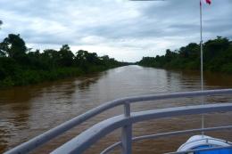 Amazonka brazylijska 3