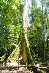 Taaakie małe amazońskie drzewo