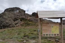 Chimborazo Bosque de Polylepis (3)