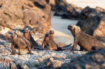 Zwierzaki z Galapagos