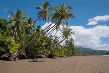 Kostaryka La Uvita 3