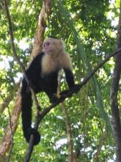 Kostaryka Manuel Antonio