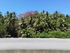 Kostaryka Montezuma