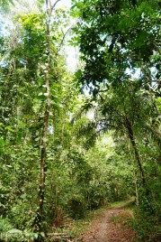 Park Narodowy Soberania, Panama (2)