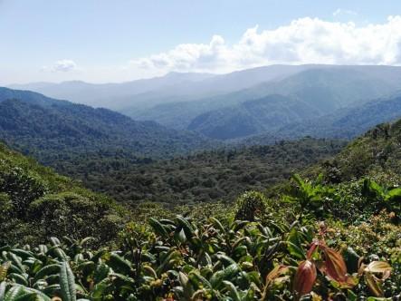Widok na lasy Monteverde