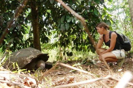 Żółwie Galapagos 1 (2)
