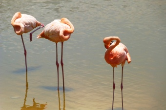 ...i flamingi z Galapagos