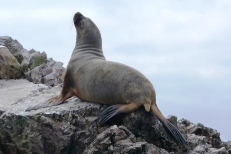 Islas Ballestas, Peru