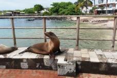 Galapagos, San Cristobal