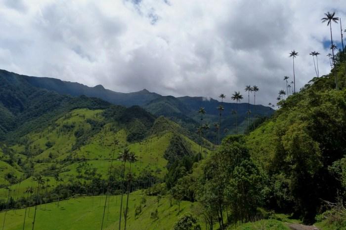 Valle de Cocora, Kolumbia