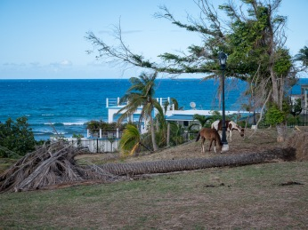 Vieques huragan (5 of 1)