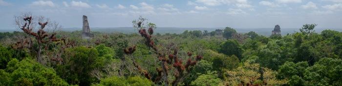 Tikal (8 of 1) — kopia