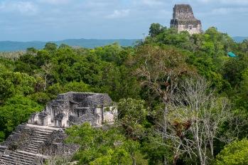 Tikal już nieco droższy