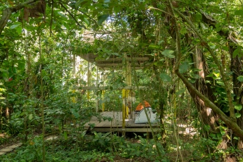 Palenque Panchan 1
