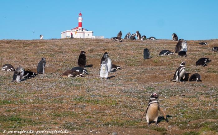 Chile Isla Magdalena pingwiny 1